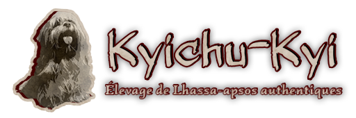 Kyichu-Kyi | Elevage de lhassa apsos authentiques – Breed of authentical Lhasa Apso dogs